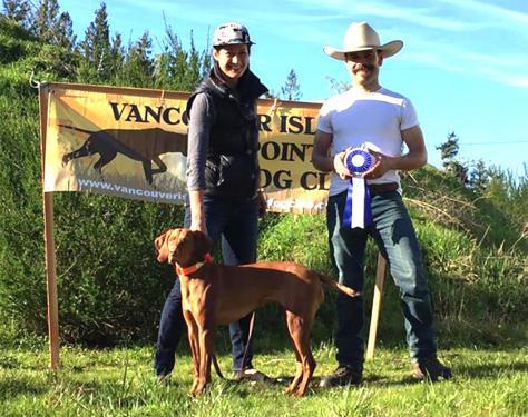 VOLTA's New Field Dog Junior Title